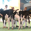 SwissExpo2017_Holstein_IMG_8681