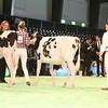 SwissExpo2017_Holstein_IMG_8771