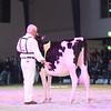 SwissExpo2017_Holstein_IMG_9274