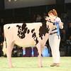 SwissExpo2017_Holstein_IMG_8804