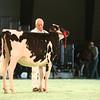 SwissExpo2017_Holstein_IMG_8957