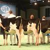 SwissExpo2017_Holstein_IMG_8982