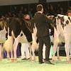 SwissExpo2017_Holstein_IMG_9193