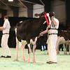 SwissExpo2017_Holstein_IMG_8985
