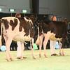 SwissExpo2017_Holstein_IMG_9086
