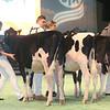 SwissExpo2017_Holstein_IMG_8683