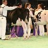 SwissExpo2017_Holstein_IMG_8779