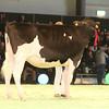 SwissExpo2017_Holstein_IMG_9219