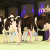 SwissExpo2017_Holstein_IMG_9322