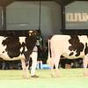 SwissExpo2017_Holstein_IMG_9087
