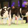SwissExpo2017_Holstein_IMG_9321