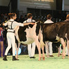 SwissExpo2017_Holstein_IMG_8837