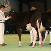 SwissExpo2017_Holstein_IMG_8900
