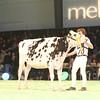 SwissExpo2017_Holstein_IMG_9223