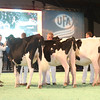 SwissExpo2017_Holstein_IMG_9088