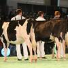 SwissExpo2017_Holstein_IMG_8843