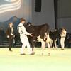 SwissExpo2017_Holstein_IMG_8979