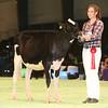 SwissExpo2017_Holstein_IMG_8728