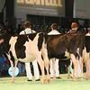 SwissExpo2017_Holstein_IMG_8844
