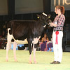 SwissExpo2017_Holstein_IMG_8731