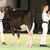 SwissExpo2017_Holstein_IMG_8906