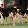 SwissExpo2017_Holstein_IMG_8678