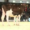 SwissExpo2017_Holstein_IMG_9229