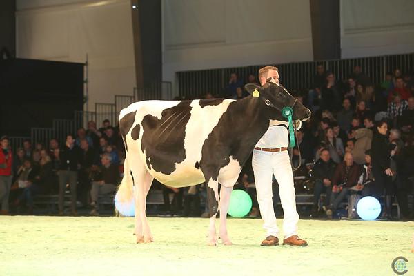 SwissExpo2017_Holstein_IMG_9225
