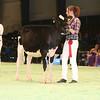 SwissExpo2017_Holstein_IMG_8726