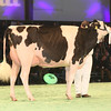 SwissExpo2017_Holstein_IMG_9511