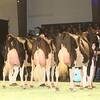 SwissExpo2017_Holstein_IMG_9712
