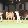 SwissExpo2017_Holstein_IMG_9628