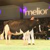 SwissExpo2017_Holstein_IMG_9980
