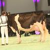 SwissExpo2017_Holstein_KIMG_0056