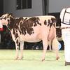 SwissExpo2017_Holstein_IMG_9638