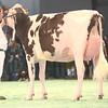 SwissExpo2017_Holstein_IMG_9686