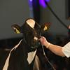 SwissExpo2017_Holstein_L32A1188