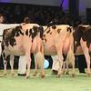 SwissExpo2017_Holstein_L32A1094