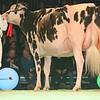 SwissExpo2017_Holstein_L32A1100
