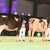 SwissExpo2017_Holstein_IMG_9622