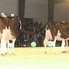 SwissExpo2017_Holstein_IMG_9746