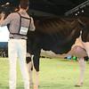 SwissExpo2017_Holstein_L32A1189