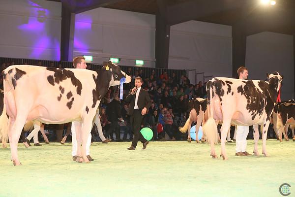 SwissExpo2017_Holstein_IMG_9614