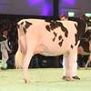 SwissExpo2017_Holstein_IMG_9612