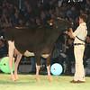 SwissExpo2017_Holstein_L32A0866