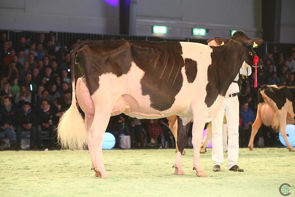 SwissExpo2017_Holstein_IMG_9967
