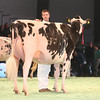 SwissExpo2017_Holstein_IMG_9607