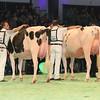 SwissExpo2017_Holstein_L32A1032