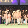 SwissExpo2017_Holstein_IMG_9571