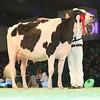 SwissExpo2017_Holstein_L32A1061